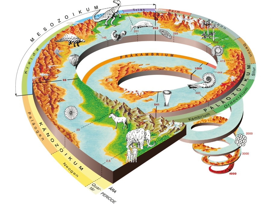 Fossilien Bedeutung